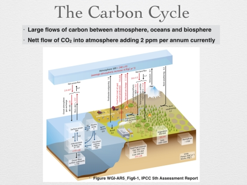Figure 8 - Carbon Cycle